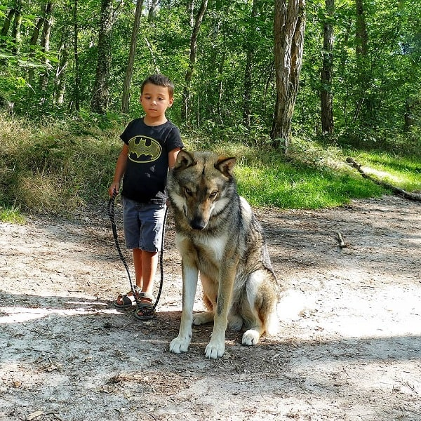 A boy posing with a Wolfdog