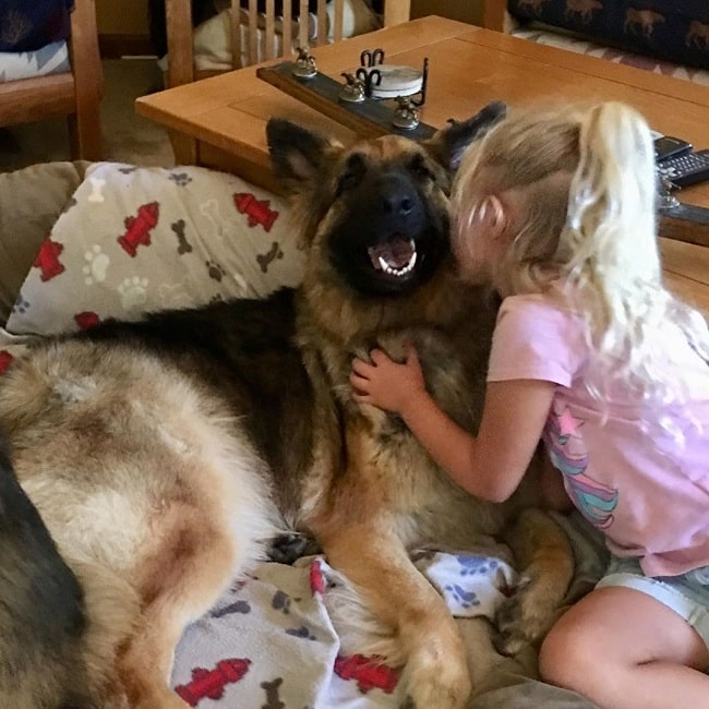 A girl kissing a Shiloh Shepherd