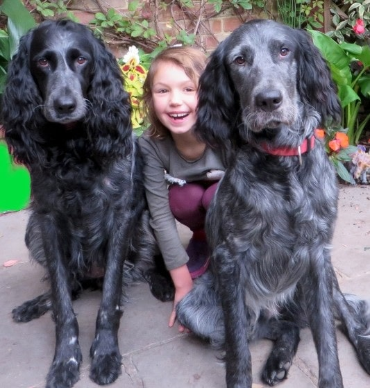 A girl posing with her Blur Picardy Spaniels