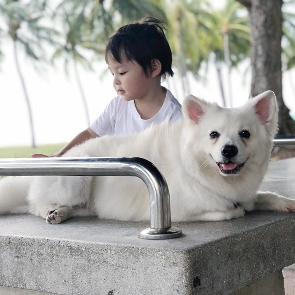 Japanese Spitz and a baby girl playing