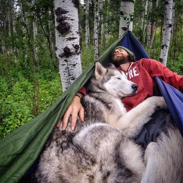 Northern Inuit taking nap with its master