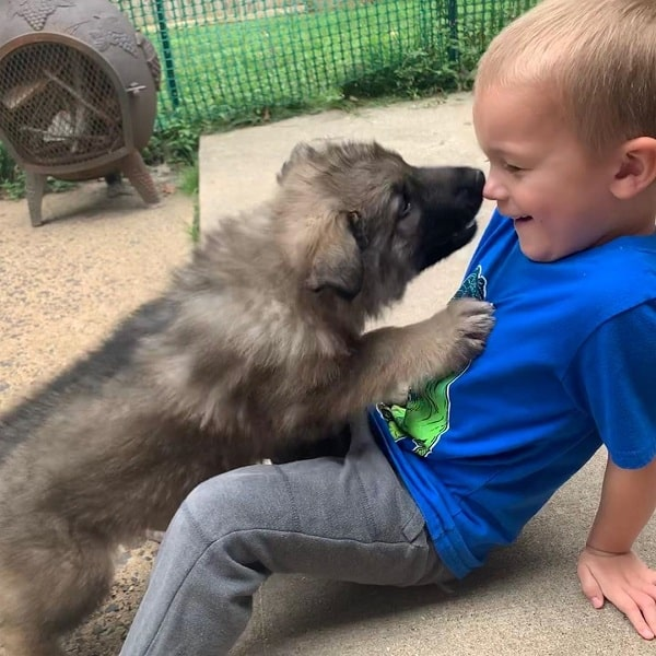 Shiloh Shepherd and a baby boy playing
