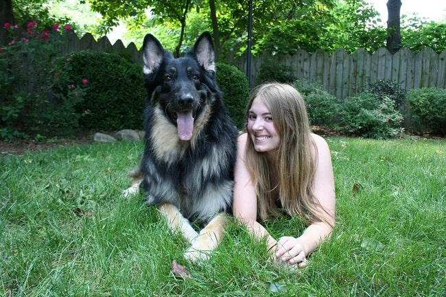 Shiloh Shepherd with its owner