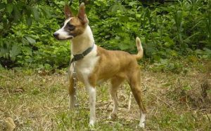 Telomian Dog temperament and personality