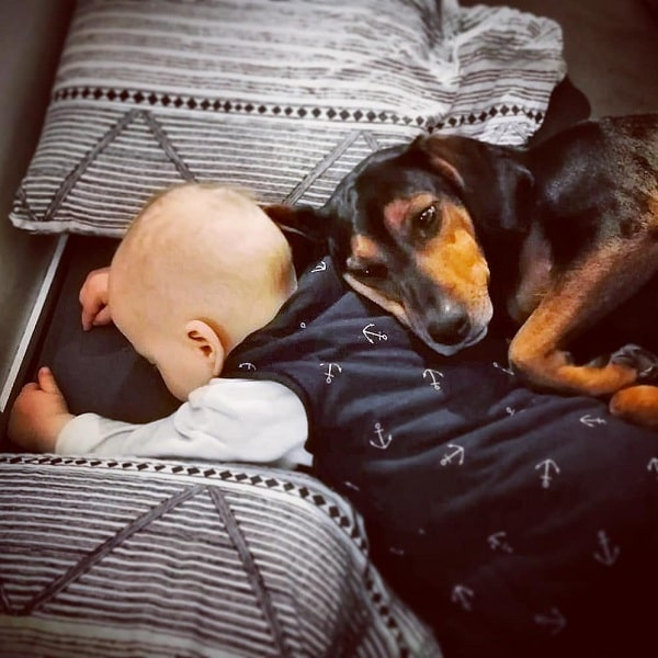 A baby and Austrian Black and Tan cuddling