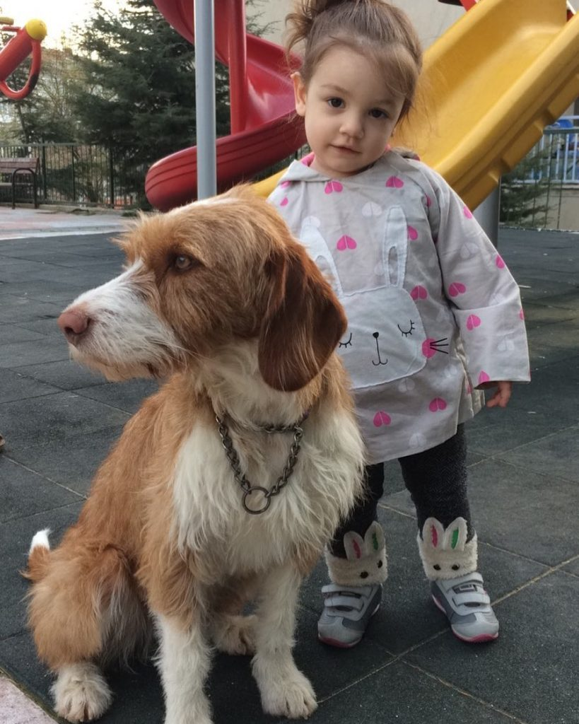 Istrian Coarse-Haired Hound and a baby