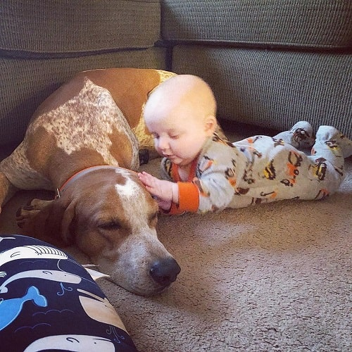 A baby and American English Coonhound Cuddling