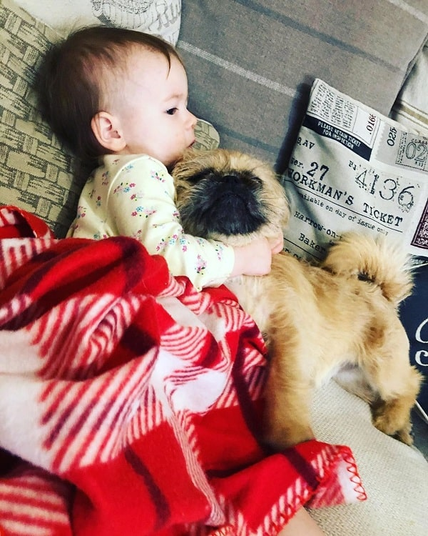 A baby and Pugzu Cuddling