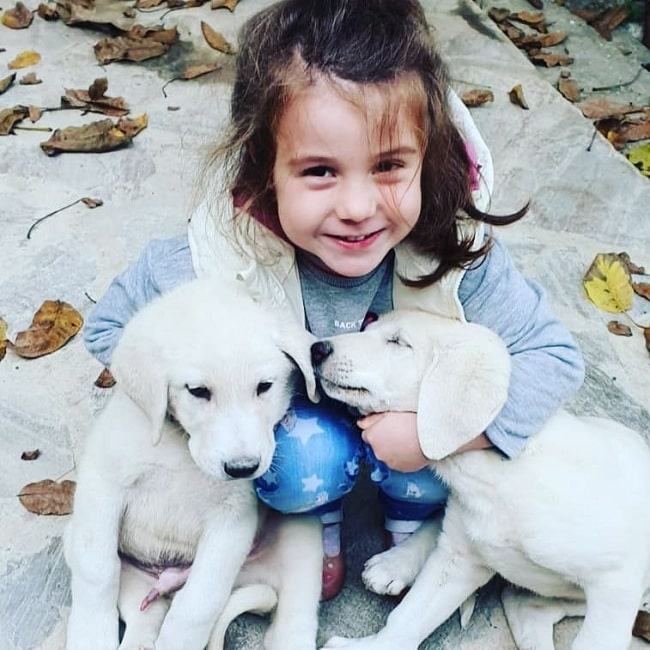 A baby girl playing with Akbash puppies