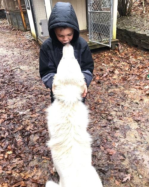 Akbash is child friendly dog