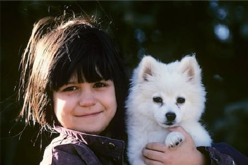 American Eskimo is a child friendly dog