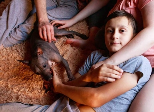American Hairless Terrier and a boy cuddling