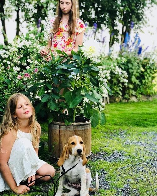 A girl Sitting with her Schweizer Laufhund