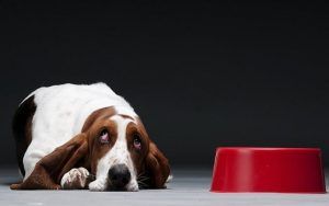 Basset Hound Diets and Supplements