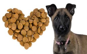 Belgian Malinois Dog feeding methods
