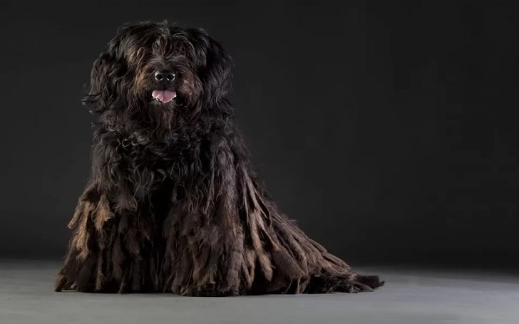 Bergamasco Sheepdog training methods