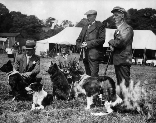 Cumberland Sheepdog with their masters