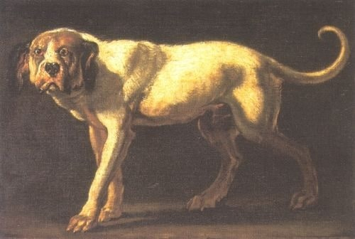 Painting of Dogo Cubano Dog