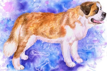 A sketch of the extinct Alpine Mastiff dog.