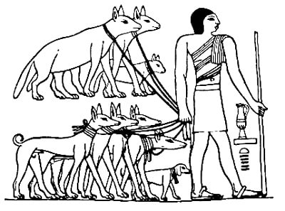 An ancient Egyptian taking several Tesem dogs on leash.