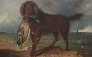 A Tweed Water Spaniel with a fish in its mouth.