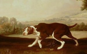 A skecth of an Old Spanish Pointer walking.
