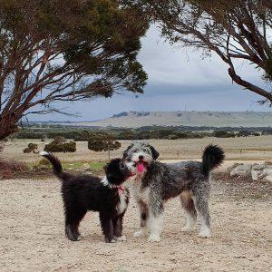 Smithfields Dog Breed Information.