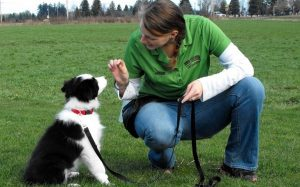 A woman training a Border Collie.