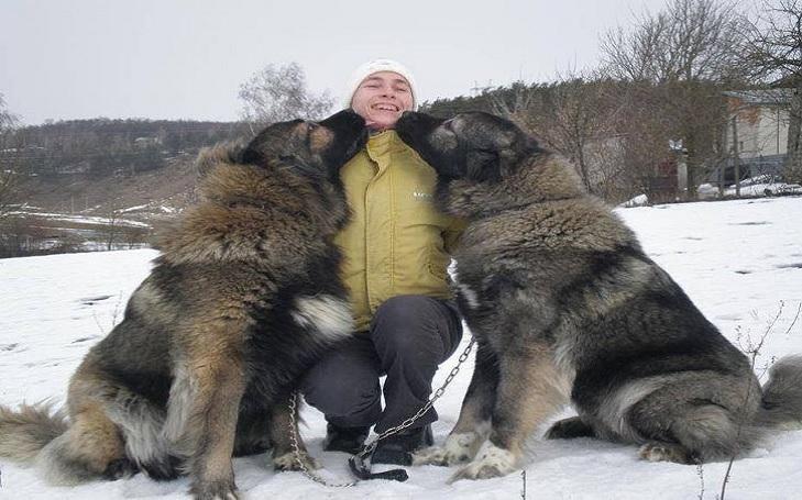 Caucasian Shepherd Dog Training methods and strategies