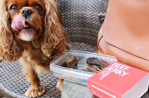 Cavalier King Spaniel about to get treats