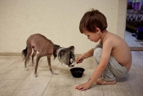 a boy feeding Chinese Crested