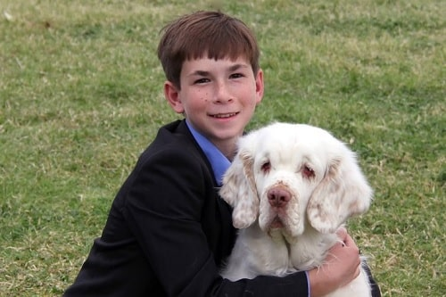 Clumber Spaniel posing for a photo with a boy