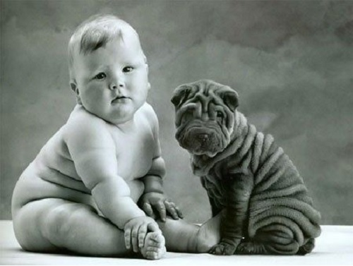 Sher-Pei puppy and baby posing for a photo