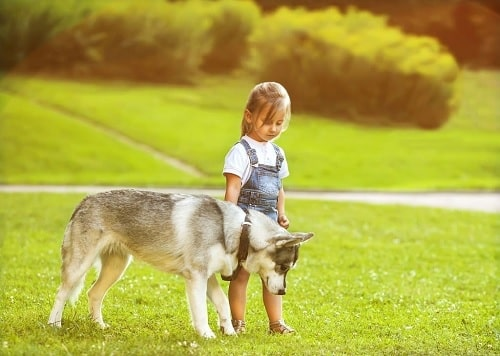 A girl with Saarloos Wolfdog in the park