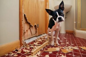 Dog separation anxiety cause, effect, prevention, and precaution.